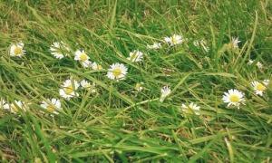 daisy weheartit
